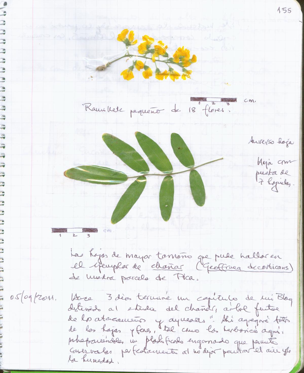 Ecoantropología Etnografía y caracterización botánica del