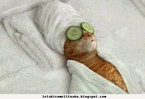cat kucing miaw masker