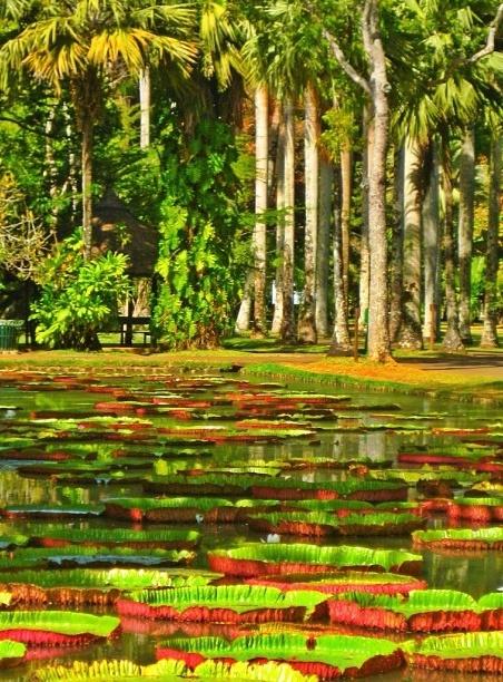 Isla de Mauricio Île Maurice Mauritius 5 Pamplemousses Garden