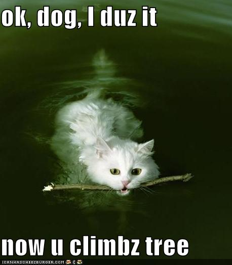 Funny cats with saying Funny Pictures