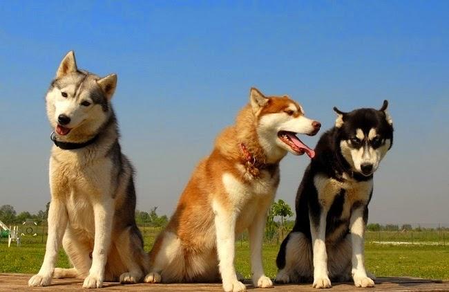 Profil osobowości psa - wytłumaczenie