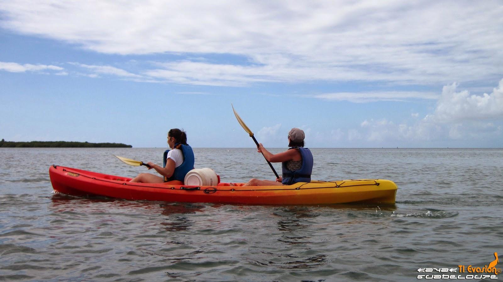 kayak mangrove