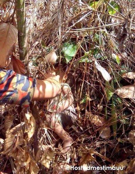 Misteri Budak 2 Tahun Di Jumpai Di Hutan