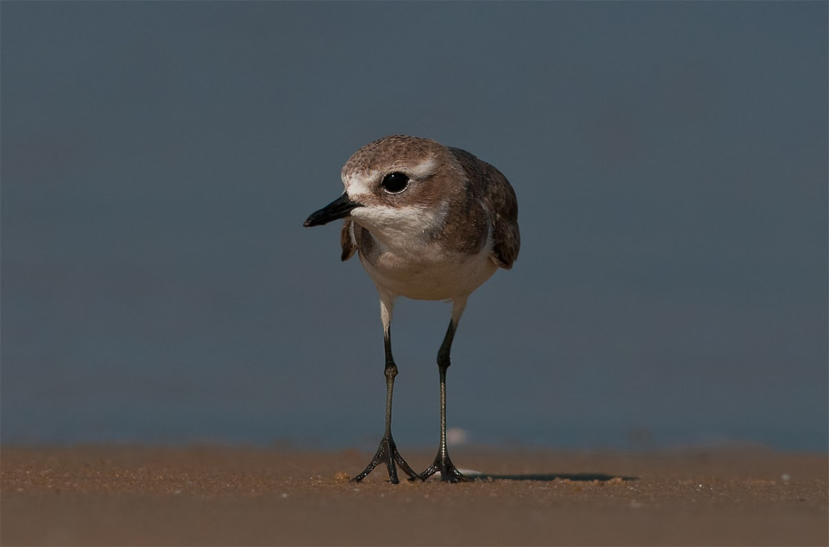 tips for photographing shore birds