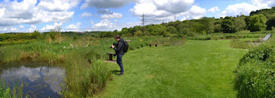 Rodley Nature Reserve,Dragonfly ponds
