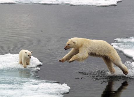 polarbears04.jpg