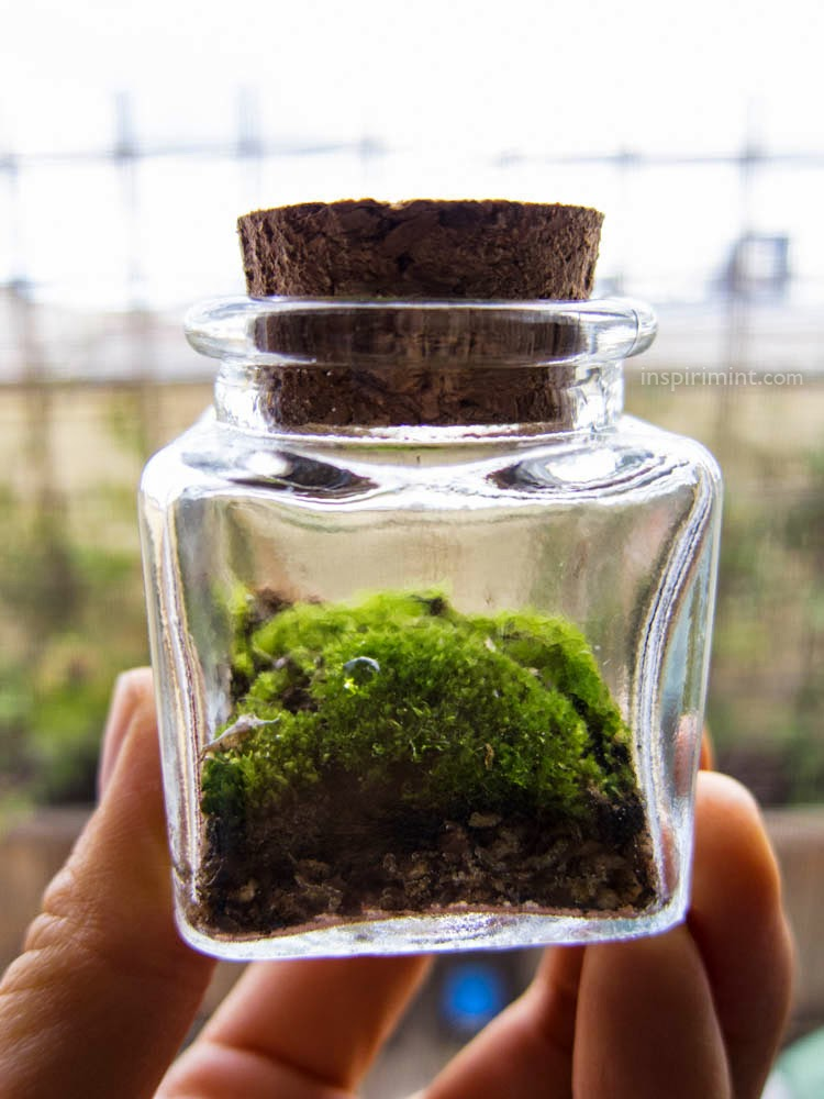 Closed-top terrariums work because the moisture the moss requires does not  escape. I suspect the plants themselves do not need very much air, ... - Inspirimint: Stormy Weather = Moss Terrarium Season