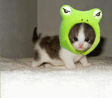 cute kitty frog2