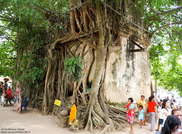 Wat Bang Kung, le temple sous l'arbre