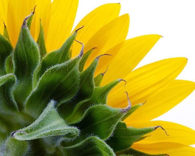 Flowers HD Desktop Wallpaper -03