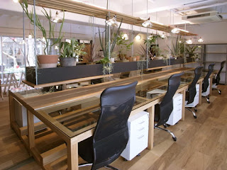 Hanging Plants In Office