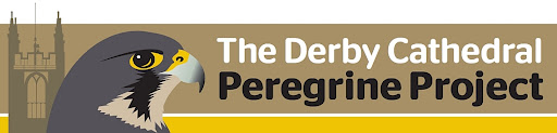 Derby Cathedral Peregrine Project - 2015