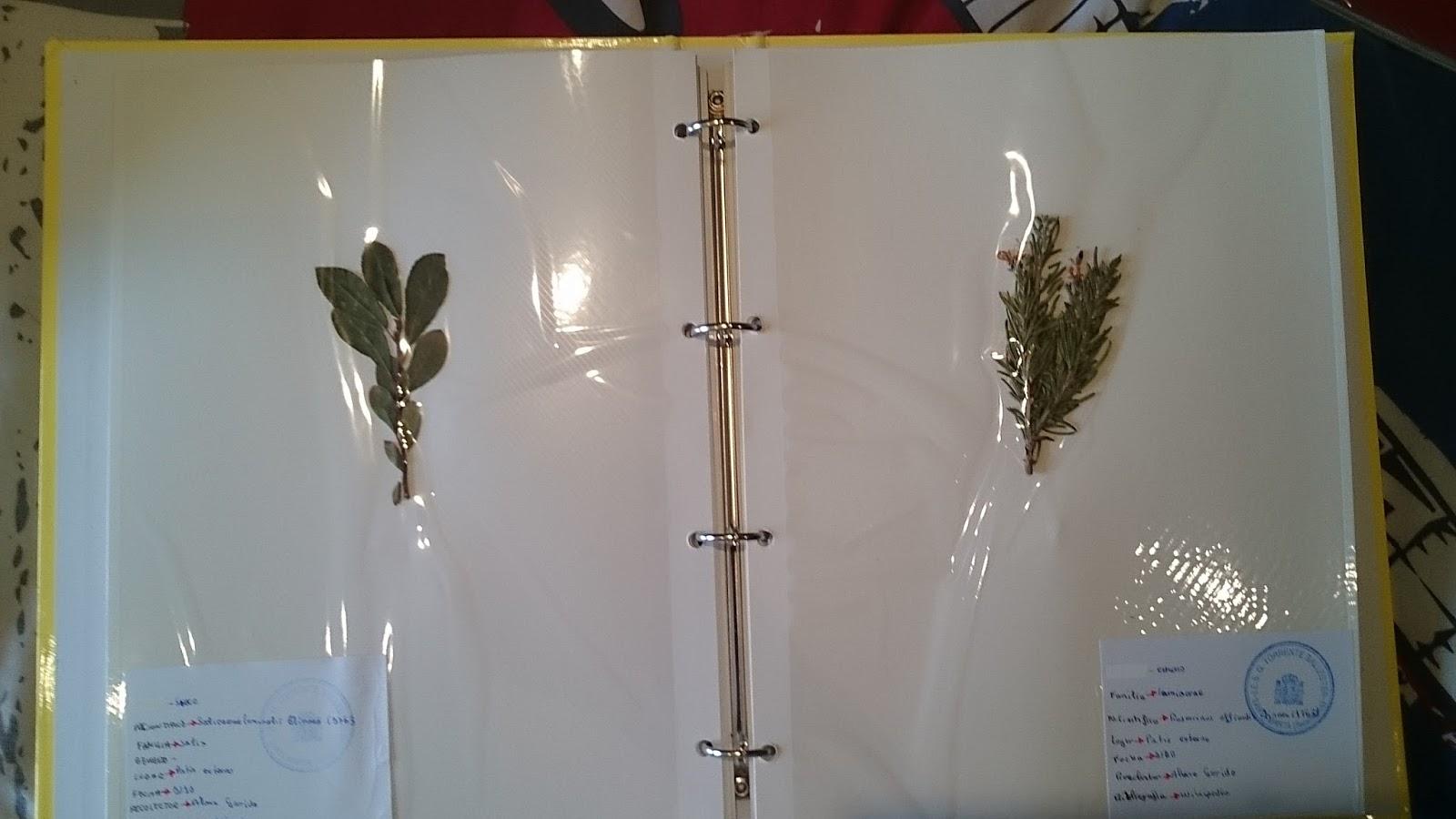 Ampliacion alvaro for Modelo de proyecto de plantas ornamentales