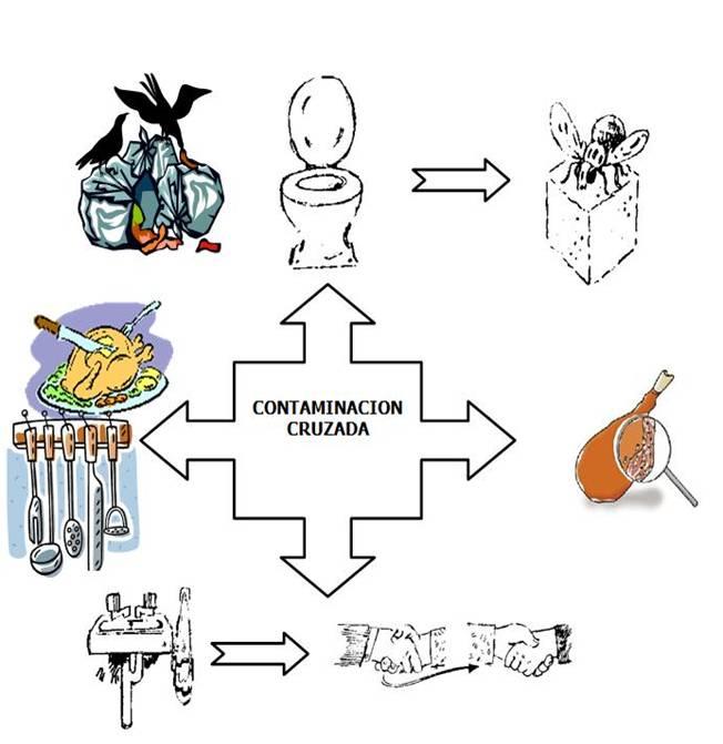 Manipulacion higienica de alimentos contaminacion cruzada - Fuentes de contaminacion de los alimentos ...