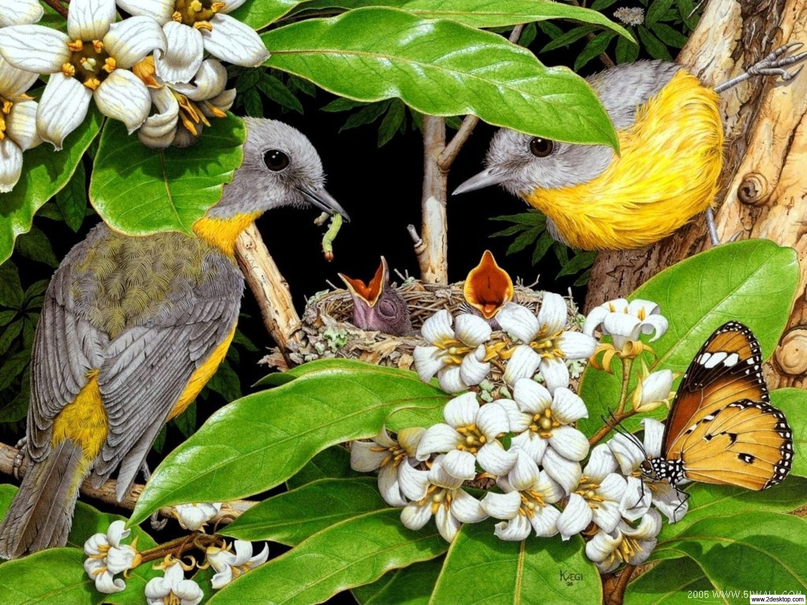 http://2.bp.blogspot.com/-EhXWSev0xxY/Tka-jFP-YlI/AAAAAAAACEw/8gDU0uJDz6A/s1600/Birds-Wallpapers_www-free-wall-paper-com-1.jpg
