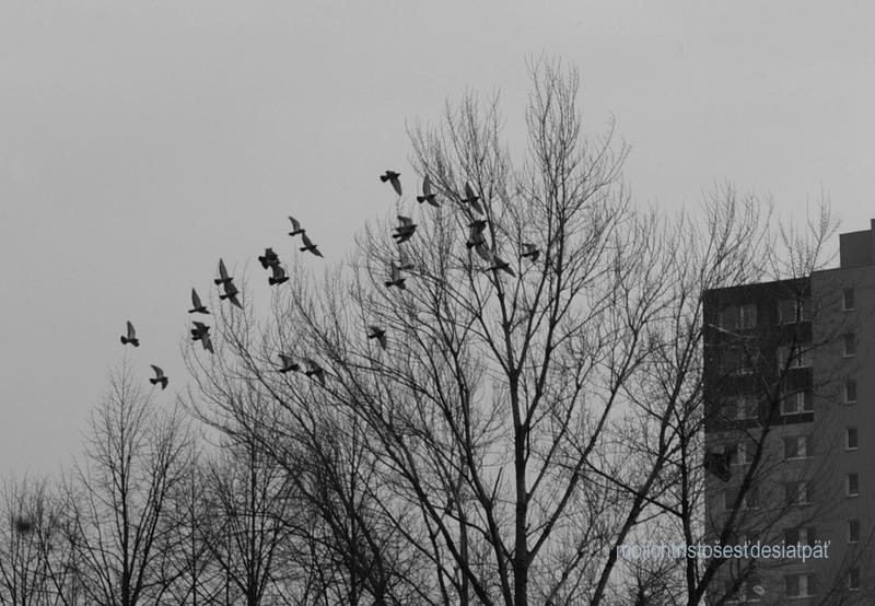 vrany