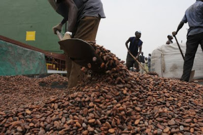 cocoa beans export