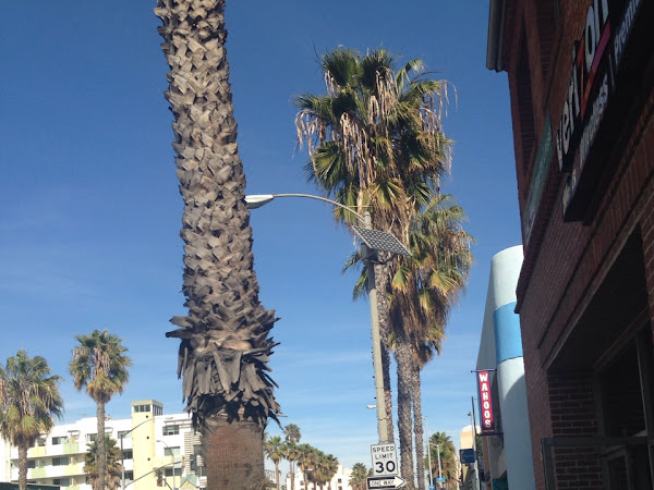 My Favorite Beach Destination: Santa Monica