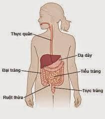viêm dạ dày ruột cấp tính