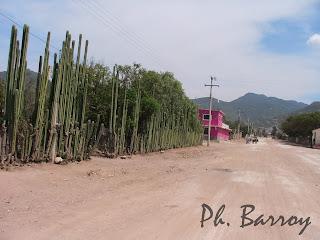 paysages mexique Oaxaca Hierve el Agua cactus