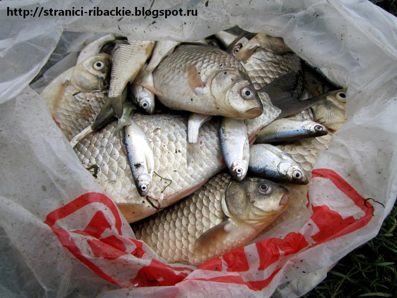 рыбалка в краснодаре в плодородном