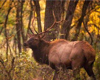 Satellite Bull Elk Ponca Access