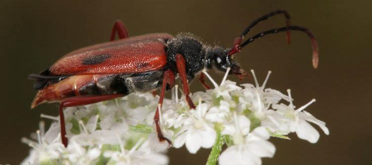 Boletín Sociedad Andaluza de Entomología Vol. 9