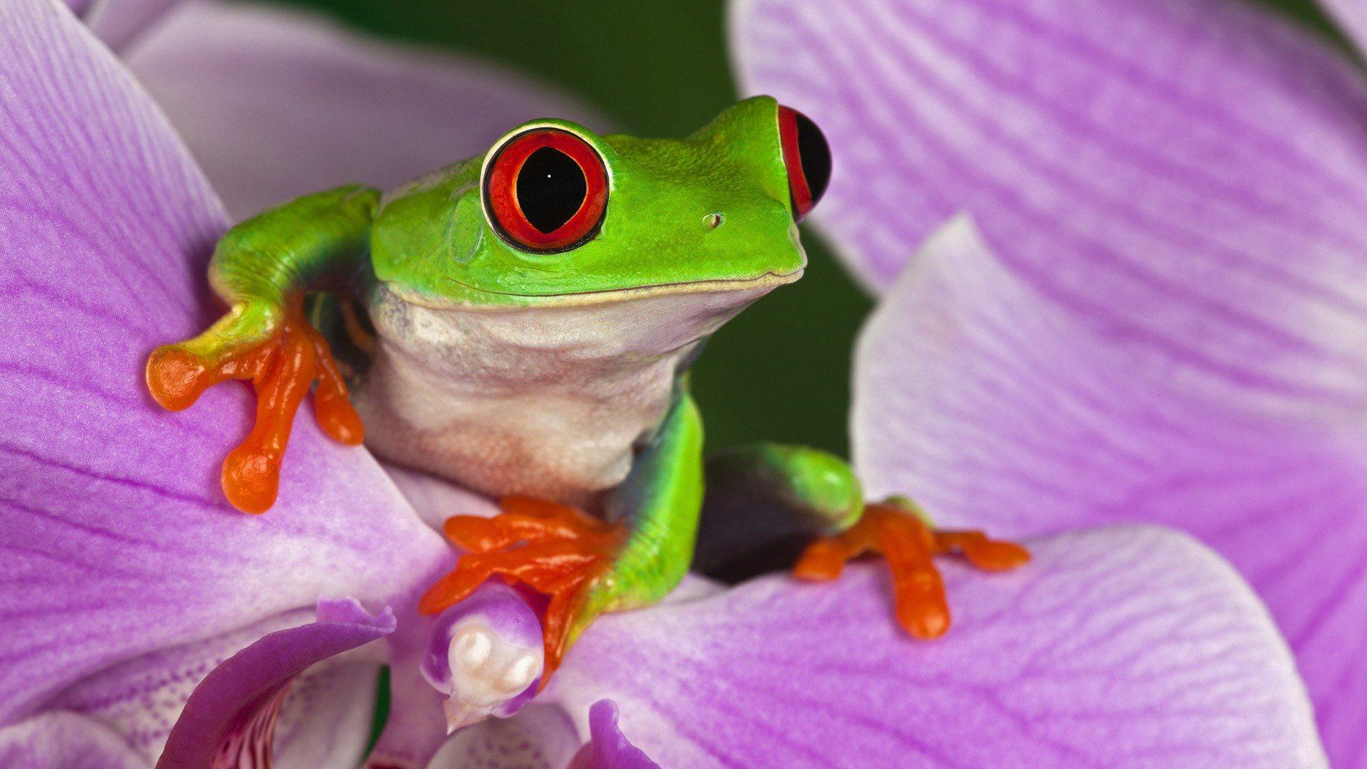 http://2.bp.blogspot.com/-EjMDZTdM5mk/UNqvJqv0NdI/AAAAAAAAP4M/oJck9FnRqLU/s1920/frog-on-purple-flower-wallpaper.jpg