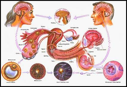 Infertility, not get pregnant, sexual impotency, nervous weakness, masturbation, low libido, sterility,  ஆண்மை குறைவு, நரம்பு தளர்சி, கை பழக்கம், குழந்தையின்மை, உடலுறவில் ஈடுபாடு குறைவு, best treatment hospital in chennai tamilnadu doctor sendhil kumar panruti,