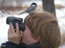 BirdWatching - Observação de Aves