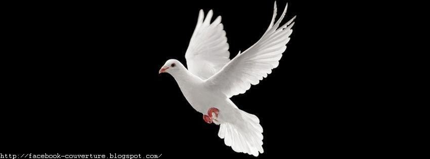 Une couverture facebook les colombes oiseaux