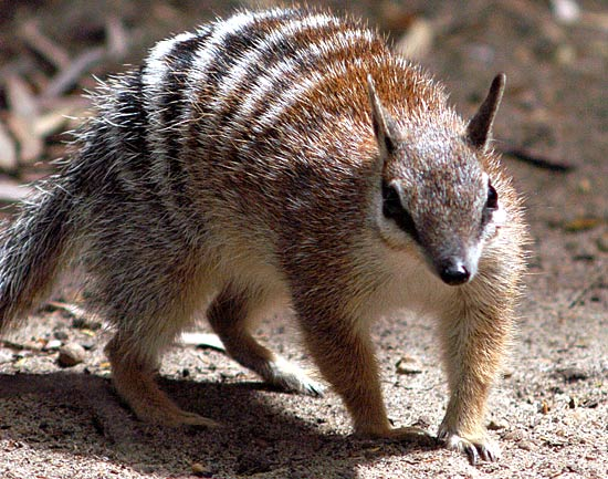 funny marsupials