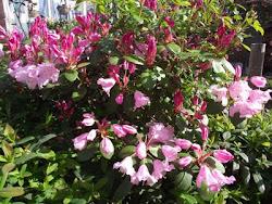My Spring Garden 2011