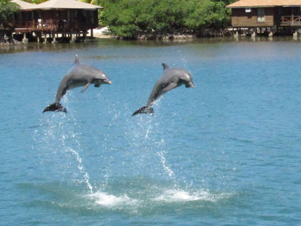 animals and birds dolphin fish images u0026 bio 2011