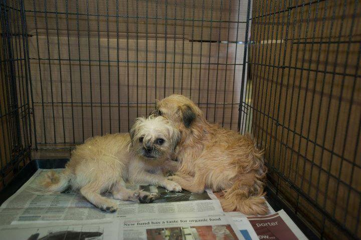 Dog Beds Canada Pet Valu