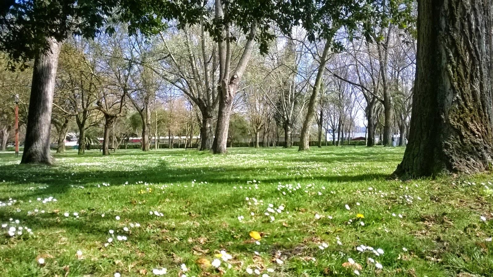 flores  y árboles en primavera