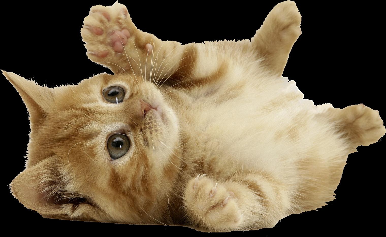 Кошки поделки рисунки