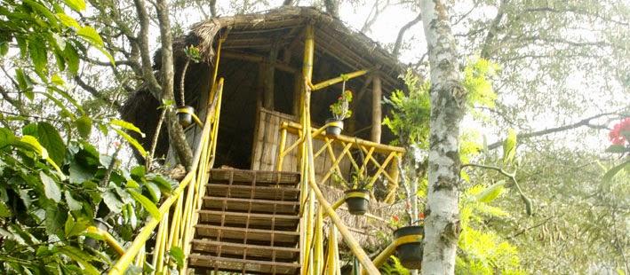 Kerala Honeymoon Packages in Tekkadi