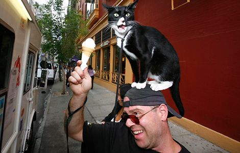 proxy - Two ways of wearing a cat hat - Fashion Trend