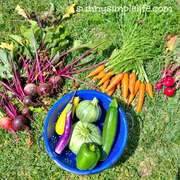 little garden in the big city, urban farm, homegrown, what you can grow in a city garden, this week's harvest