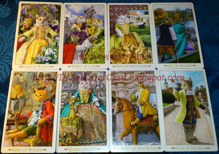 Baroque Bohemian Cats Tarot Minor Arcana Card Knight Wands Pentacles ไม้เท้า Cup Queen King ดาบ เหรียญ ถ้วย sword Page ไพ่ทาโร่ ไพ่ป๊อก ไพ่ แมว ไพ่ทาโรต์ ไพ่ยิปซี ไพ่ยิบซี บาร๊อค โบฮีเมียน แคทส์