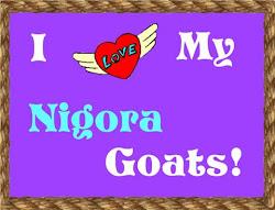 Nigora Goats Rock!