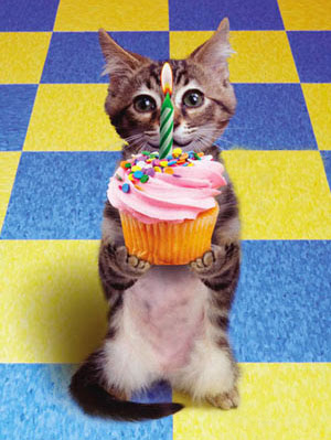 grey and white kitten holding a yellow cupcake with a candle on top