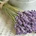 35 βότανα «σύμμαχοι» για καλή υγεία και ομορφιά!!!