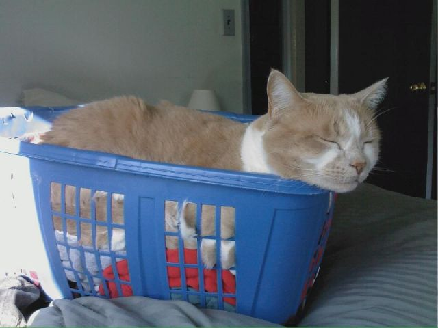 Funny cats - part 170, cat photos, funny cat, cute cat, adorable cat pictures