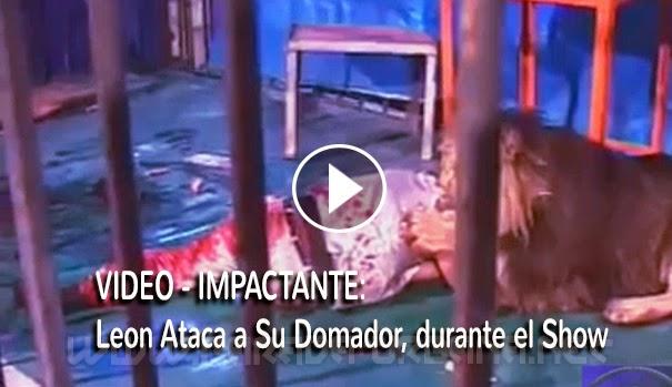 VIDEO IMPACTANTE - Un León ataca a su Domador, en pleno Show, y su compañero trata de salvarle la vida