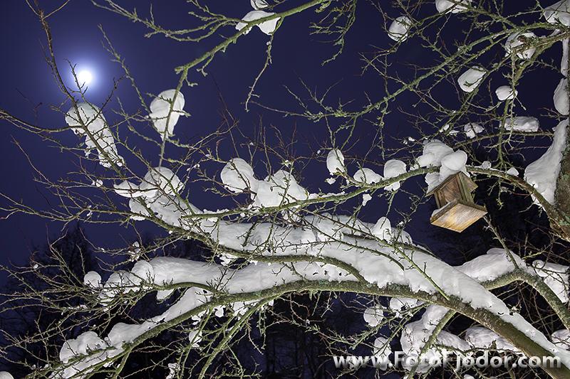 С Рождеством Христовым от FotoFjodor