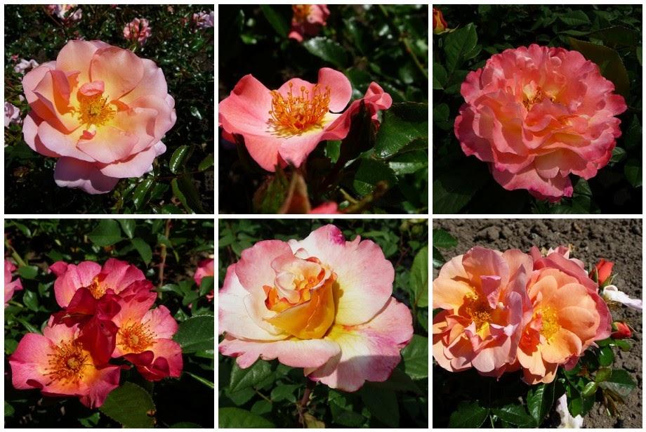 Schilderijen van orchidee n en andere bloemen for Schilderijen van bloemen