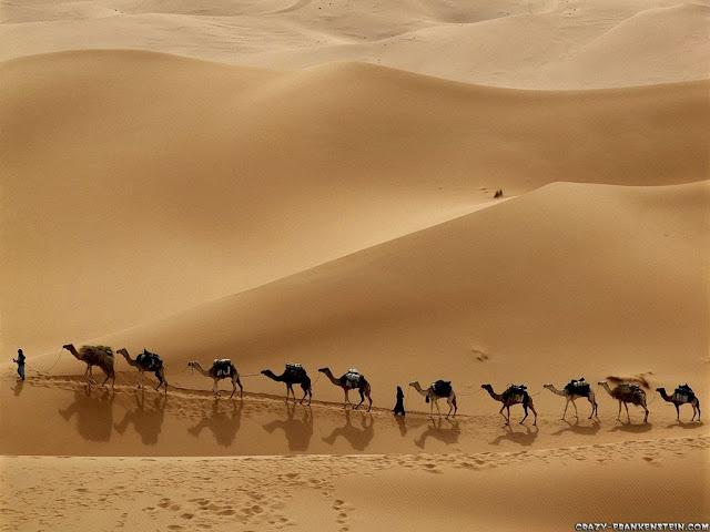 camel caravan libya wallpaper