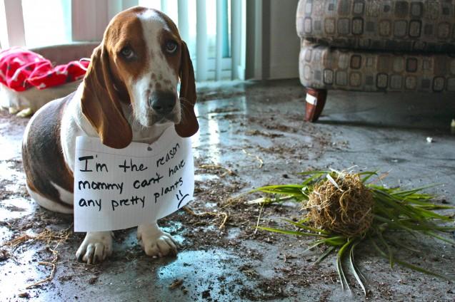 sad-dog-dead-plant